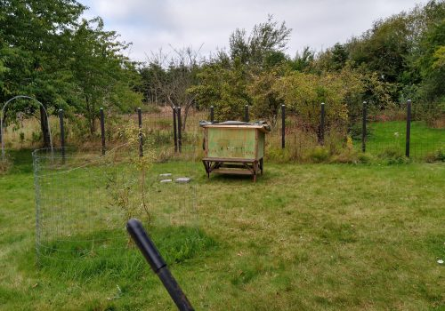 Nyt hønsehus, lille hegn samt sandbad i gård 1