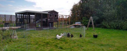 Hønsehave og montere dørtrin i små låger