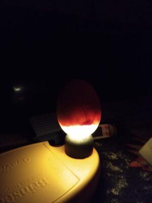 18. dagen - hvordan lyser man æg