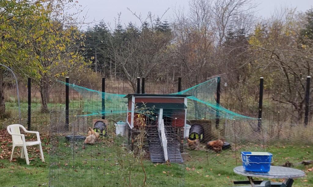 Overdækning af hønsegård- fugleinfluenza og hønsehold