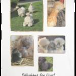 silkehønse merchandise - fleecetæppe med silkehøns