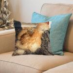 silkehønse merchandise - lille pude - gul silkehøne forside i sofa kvadrat tæt på