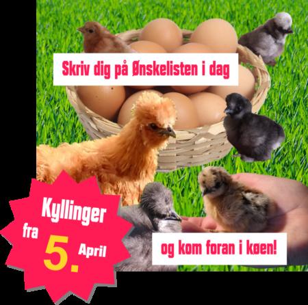 køb kyllinger i Silkehaven