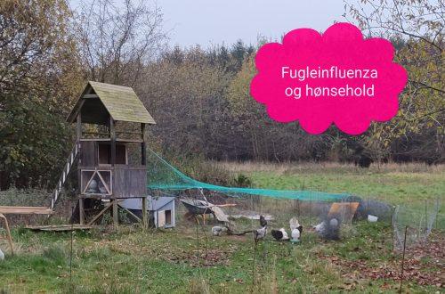 Fugleinfluenza og hønsehold