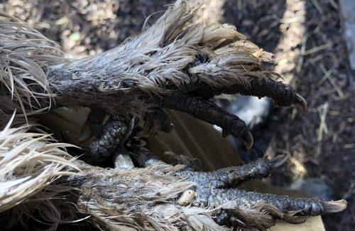 Hønsefødder med kalkbensmider
