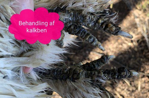 silkehaven. behandling af kalkben. kalkbensmider